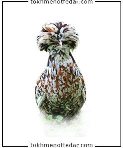 تخم نطفه دار مرغ لهستان رنگی