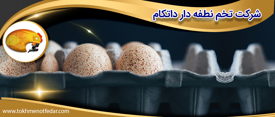 فروش تخم بوقلمون