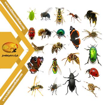 انواع حشرات