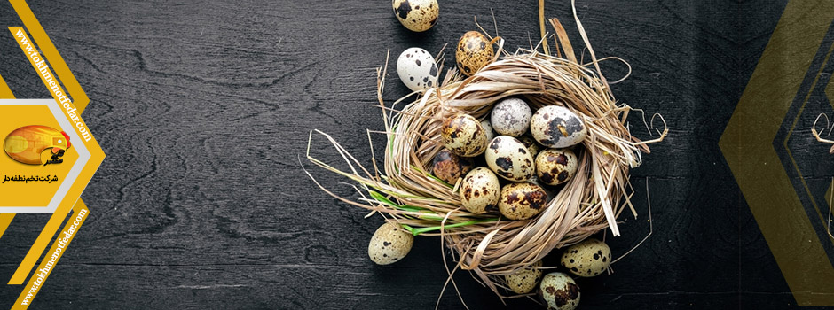 تخم خوراکی بلدرچین