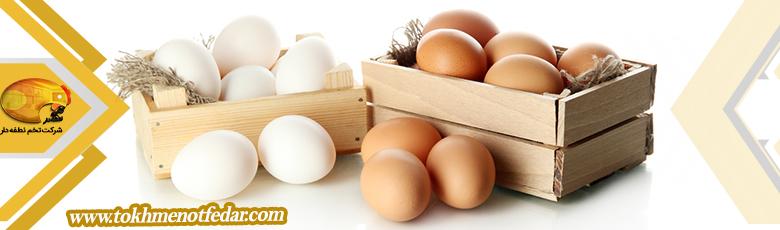 تخم مرغ خوراکی صادراتی